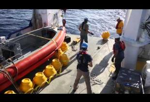 UL Lafayette leads research on oil spill's effect on whales