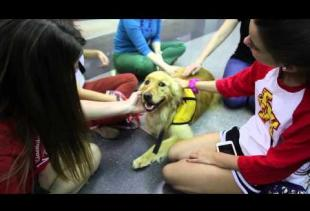 Therapy Dogs Spring 2015